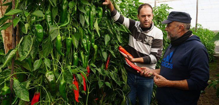 Fertilización y genética: Entrevista a José Soto Pérez, gerente para España, Portugal y Marruecos de Nirit Seeds Ibérica